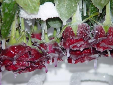 Frozen dreams 2006